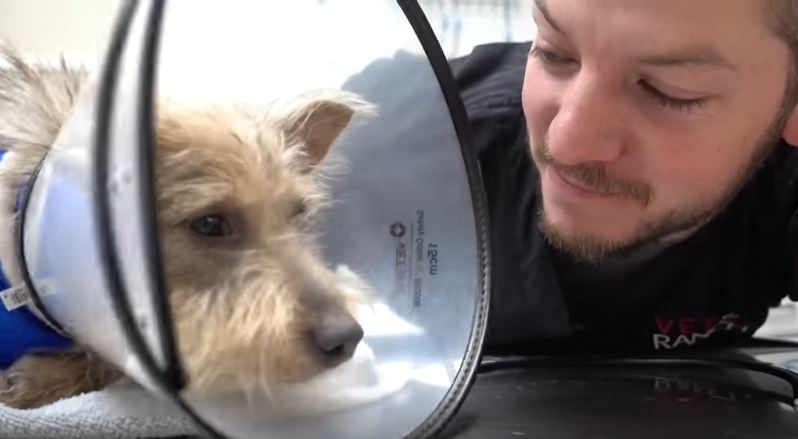 Vet Works Hard To Figure Out Why Homeless Puppy Can't Use His Leg