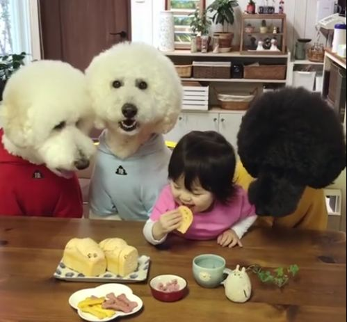 Generous Toddler Shares Meal With Her Three Hungry Pooches