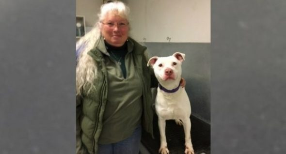 "Dog Deemed ""Unadoptable"" Will Become Washington's First Deaf K-9"
