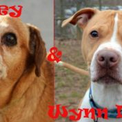 Adoptable Odd Couple: Fidgey & Wynn Dixie!