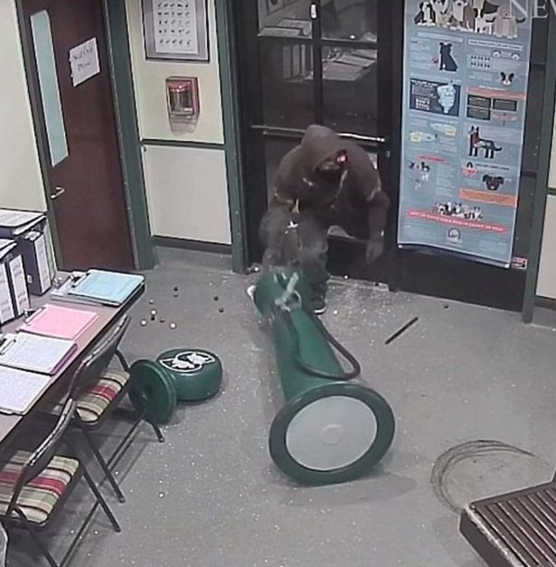 Dumbest thief: Masked man steals gumball machine from animal shelter