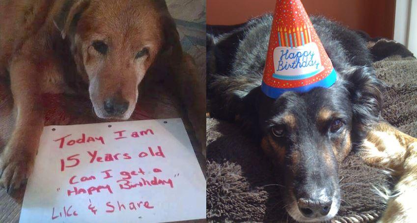 Sweet Senior Dogs Celebrating Their Birthdays