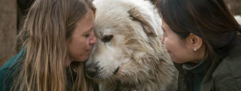 Humane Society International rescuing 80 dogs from South Korean meat farm