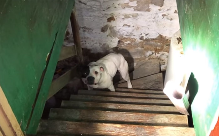 Man Moving Into A New House Finds A Dog Left Behind In The Basement, And The Dog's Reaction Says It All