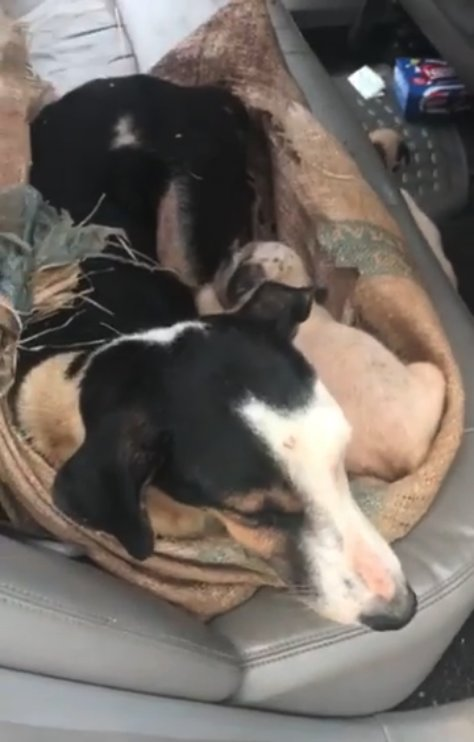 Mama Dog And Her Pups Found Tied Up In A Sack In The Middle Of Nowhere