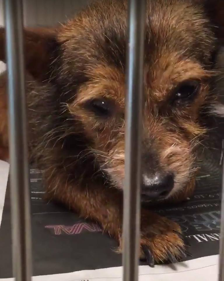 Sam: Tiny senior is desperate to be saved