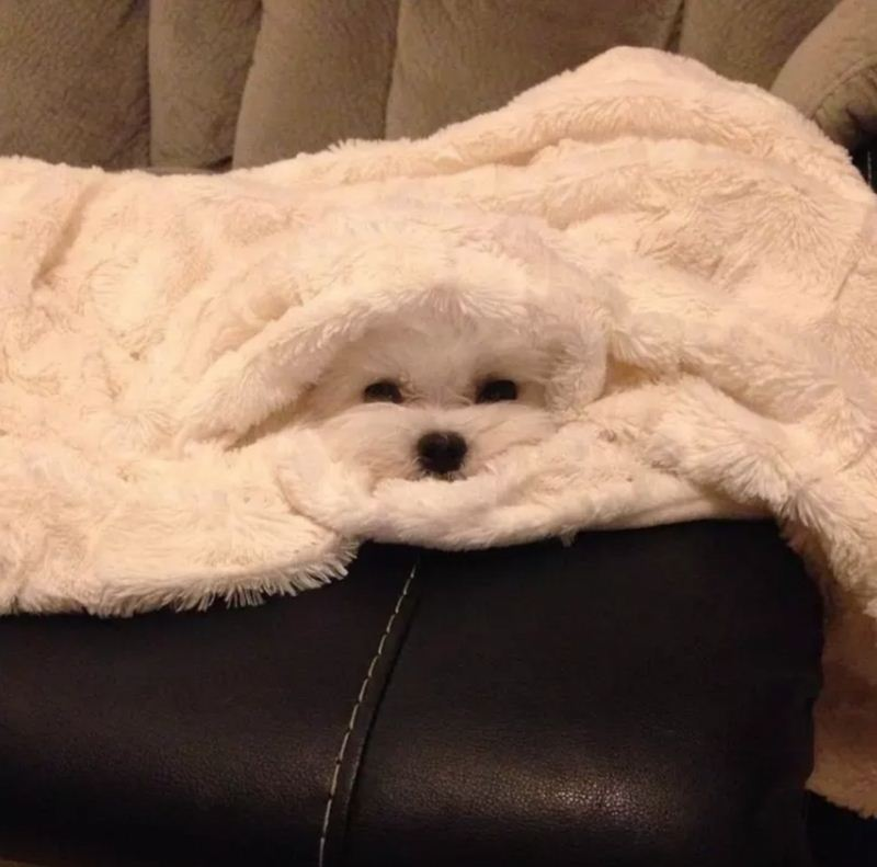Pics Of Chameleon Dogs Perfectly Blending In With Their Surroundings