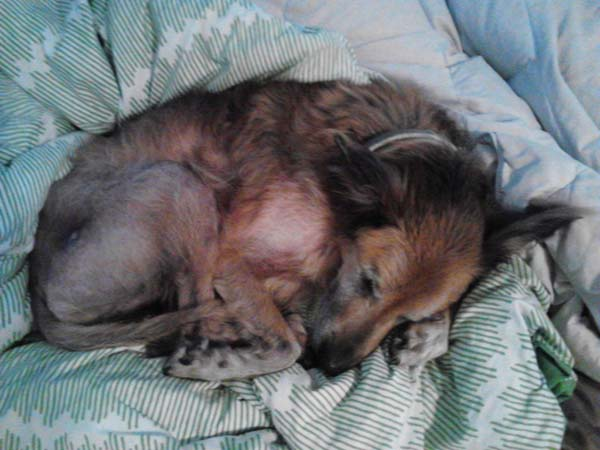 No One Wanted This Dying, 16-Year-Old Shelter Dog — Until One Family Took A Chance
