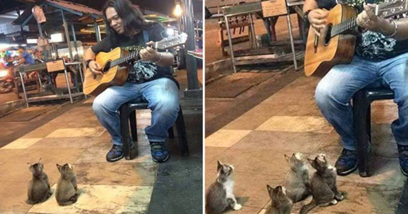 Street Musician Is About To Call It A Day When An Adorable Audience Shows Up