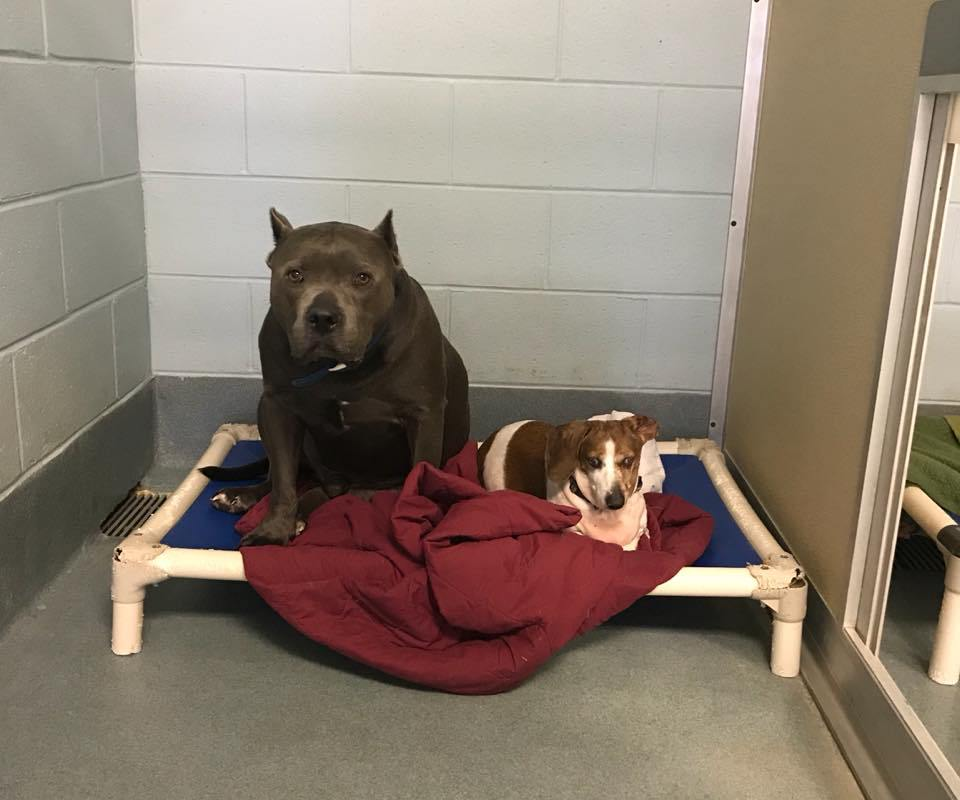 Blind dog and canine 'guide' lost home, shelter searches for new family