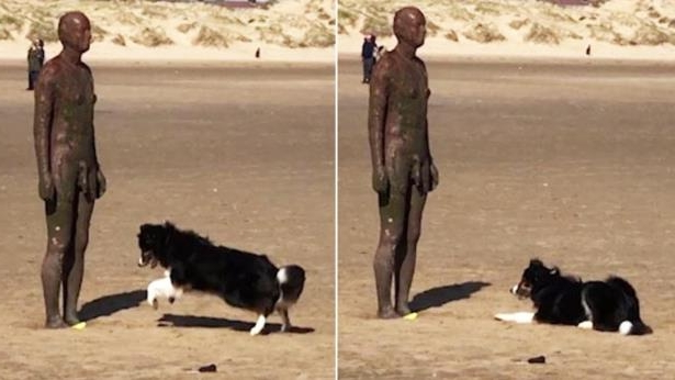 Confused Dog Adorably Tries To Plays Fetch With Statue