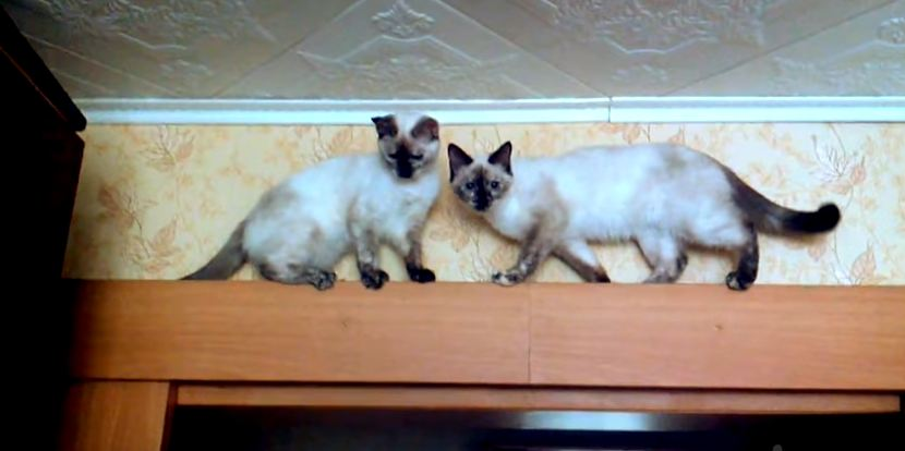 Clever Kittens Figure Out How To Pass Each Other on Narrow Ledge