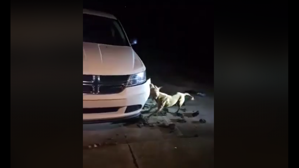 Woman Sparks Outrage For Asking Police To Shoot Stray Pit Bull