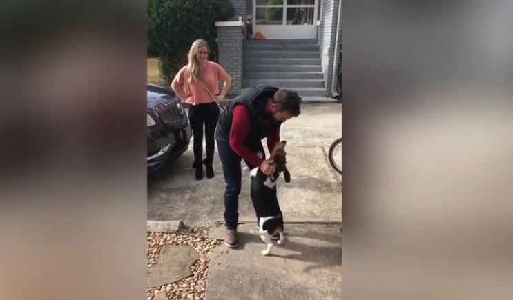 Beagle Goes Crazy With Happiness When Reunited With His Dad After 18 Months