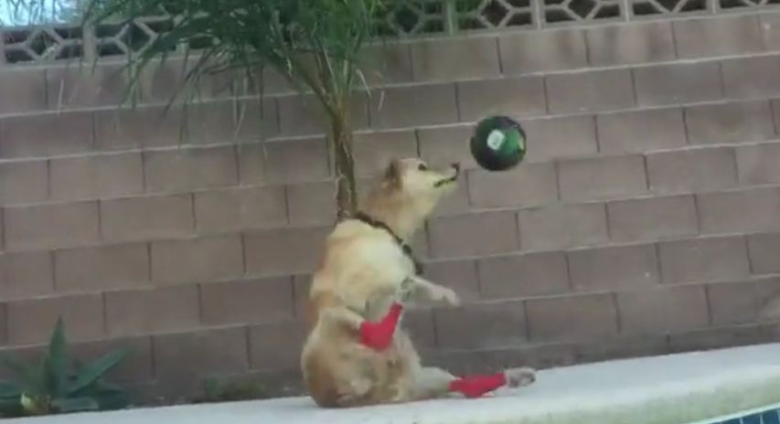 The dog is playing with his owner