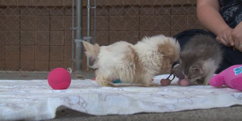 Tiny Pup Rescued From A Puppy Mill Is Introduced To A New Friend To Start His New Life