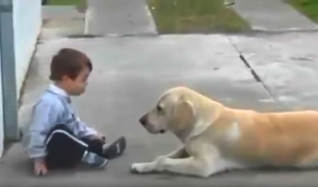 Dog Befriends Little Boy With Down Syndrome Once Again Proving Dogs Are The Best