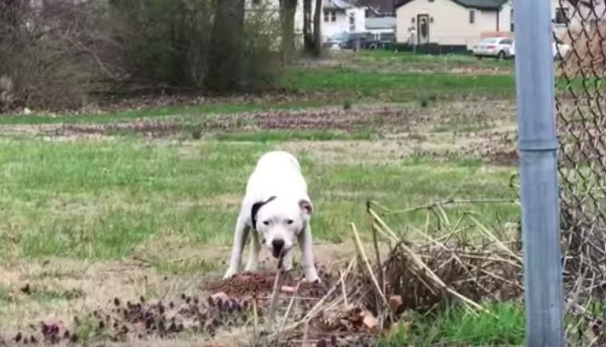 Rescuers Follow Stray Mama Dog and Get a Lot More Than They Expected