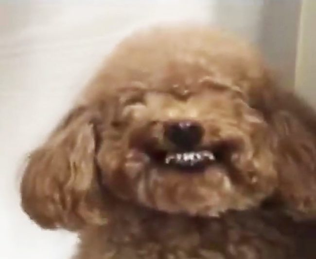 Video: Adorable dogs smile on command