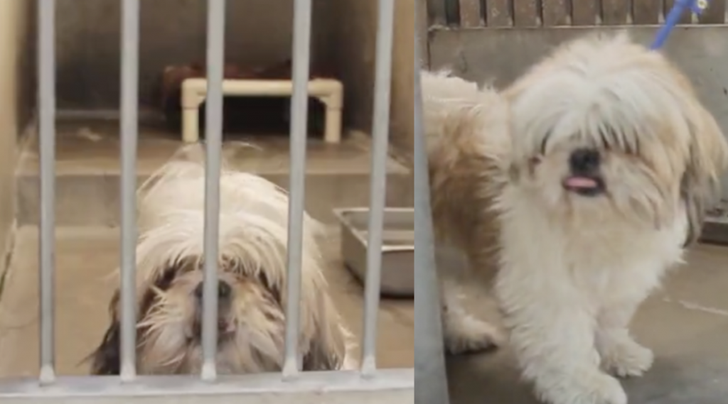 Old Dog Is Pulled From The Shelter And Given A Makeover To Save His Life