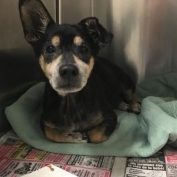 Cody left behind: Senior pup heartbroken at Miami shelter
