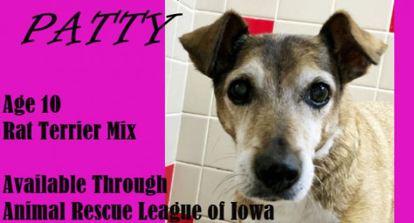 Adorable and Adoptable! Is Pert & Pretty Ms. Patty Your Perfect Pet?