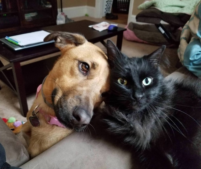 Pics To Show Why It's Always Better To Have More Than One Pet