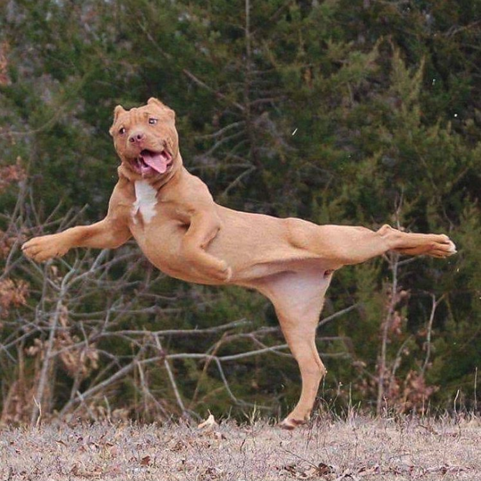 Photos That'll Make You Think Differently About Pit Bulls