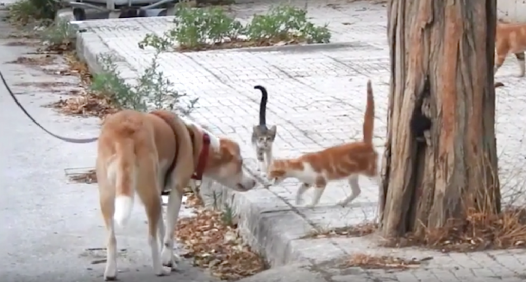 Rescue Dog Helps Feed 30 Stray Cats On Her Daily Walks