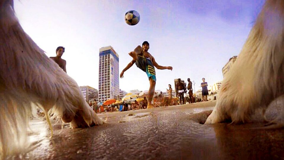This Border Collie Is Famous in Brazil Thanks to His Soccer Skills