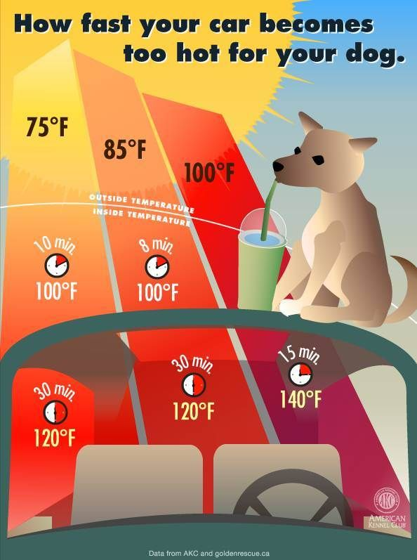 If You See A Dog In A Hot Car This Summer, Remember This Simple Window Hack