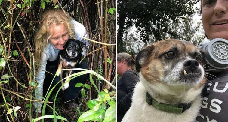 Dogs Surrounded By Lava And Stuck Behind A Fence Saved After 10 Days