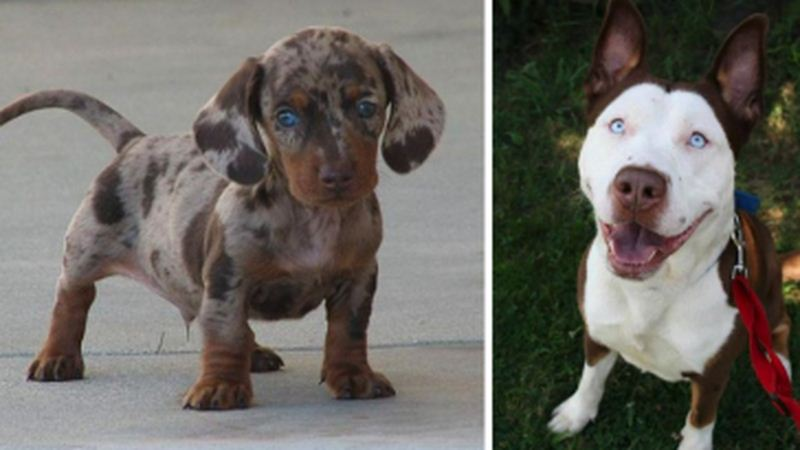 Unique Dog Crossbreeds That'll Make You Do A Double Take