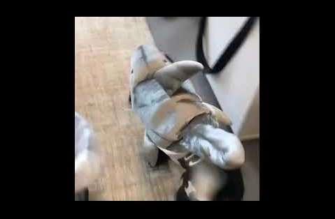 Dog Dressed as Shark Wanders Around Human Office