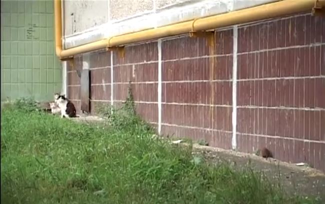 Giant Russian Rat Goes Full-On Attack Mode On Innocent Cats