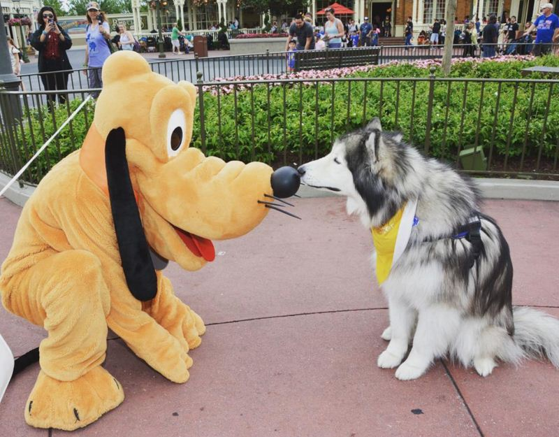 Happy Dogs Having The Times Of Their Lives At Disneyland