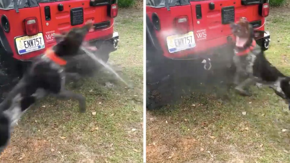 Playful Dog Can't Resist 'Helping' Dad Wash Jeep in Vira
