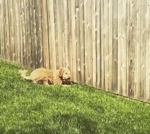 Puppy Sneaks Under Fence To Play With Dog