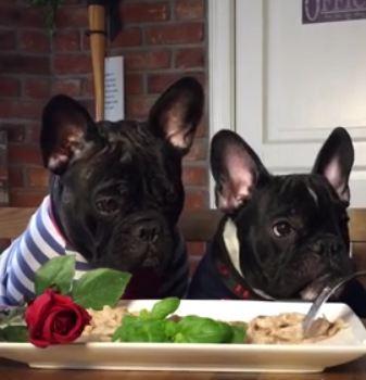 French Bulldogs enjoy Valentine's Day dinner