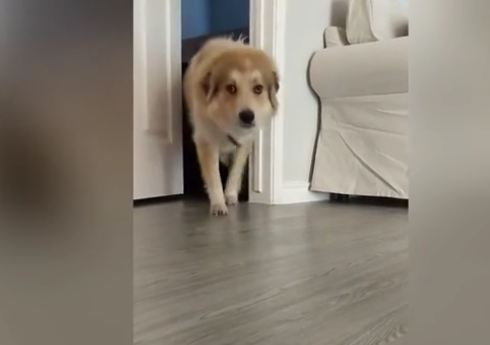 Hurricane rescue dog Max conquers his fear of partially closed doors