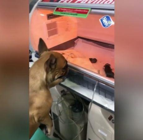Mother Dog Watches Over Her Premature Newborn Puppies In Heartwarming Video