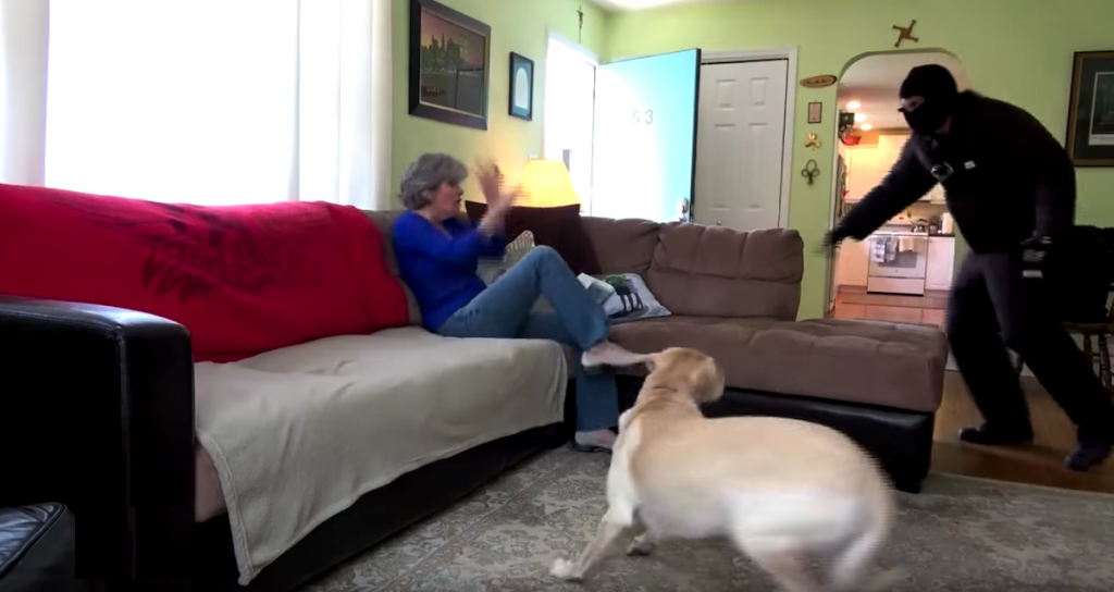 Owners Test Their Dogs To See If They'd Defend Them During A Home Invasion