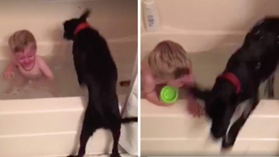Joyful Lab Can't Resist Jumping in Bathtub with Kiddo