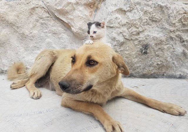 Kitten Who Lost Her Mom Asks Dog Who Lost Her Pups To Adopt Her