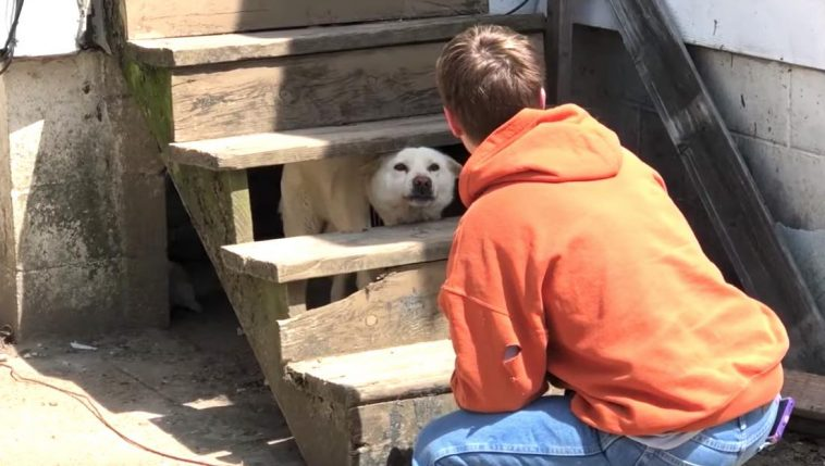 Abandoned Dog is Shaking So Hard from Fear He Makes Rescuers Cry