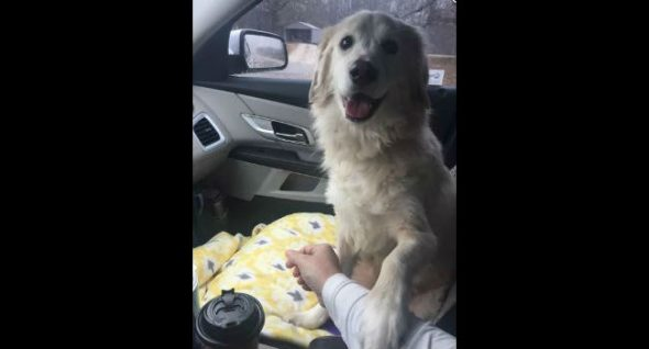 "Grateful dog: Shelter pup ""holds hands"" with rescuer on drive to foster home"