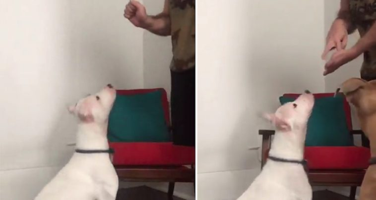 Deaf Dog Told 'We're Going To The Park' In Sign Language Has The Cutest Reaction