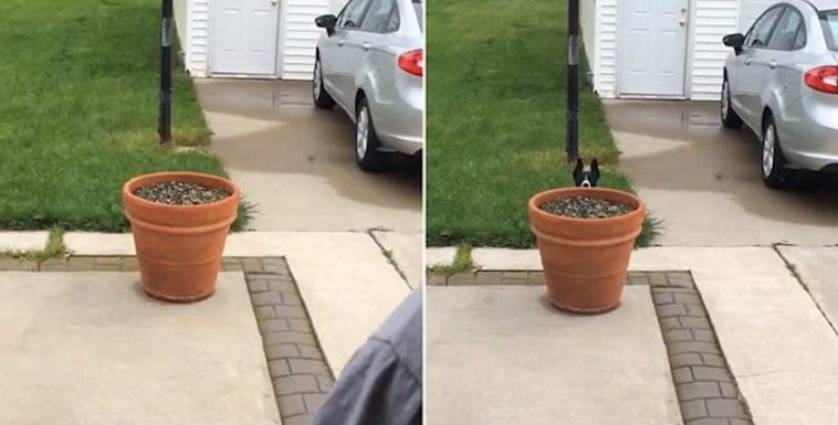 Dog Thinks She Is Being Sneaky When She Doesn't Want To Come Inside