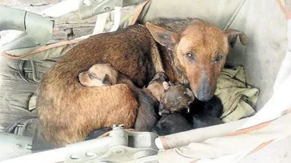 Woman Hears Crying Outside, Sees Newborn Human Baby Among Stray's Puppies