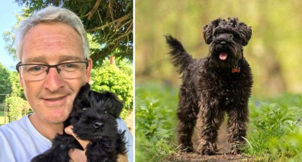 Dog stolen by Amazon delivery driver returned after owner emails Jeff Bezos